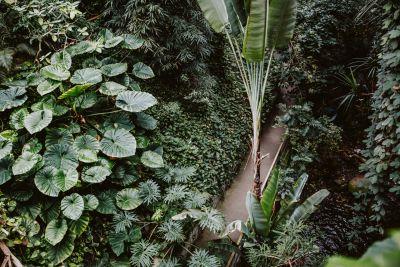 Dschungel in der Biosphäre