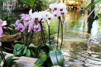 Orchideenblüte in der Biosphäre