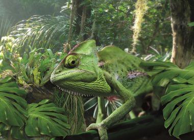 Chamäleon in der Biosphäre Potsdam im Dschungel