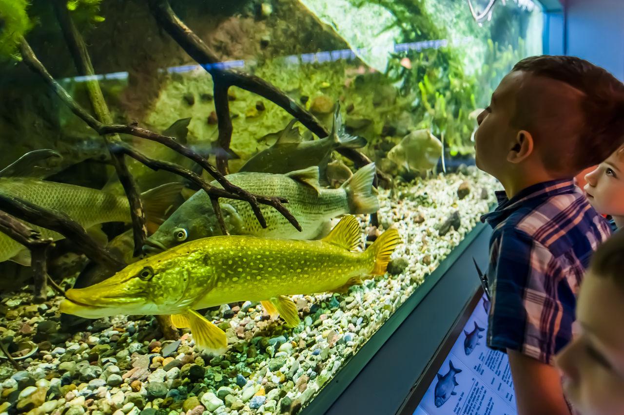 Hecht & Co. im Aquarium des Naturkundemuseums Potsdam (© Naturkundemuseum Potsdam/ Foto: D. Marschalsky)