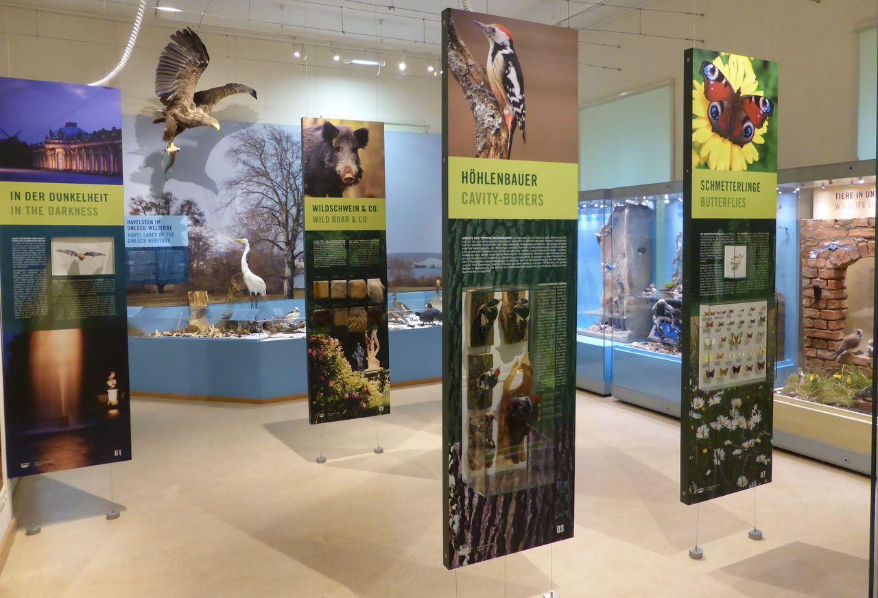 """Blick in die Ausstellung """"Tierisches Leben im UNESCO-Welterbe"""" (© Naturkundemuseum Potsdam/D. Knuth)"""