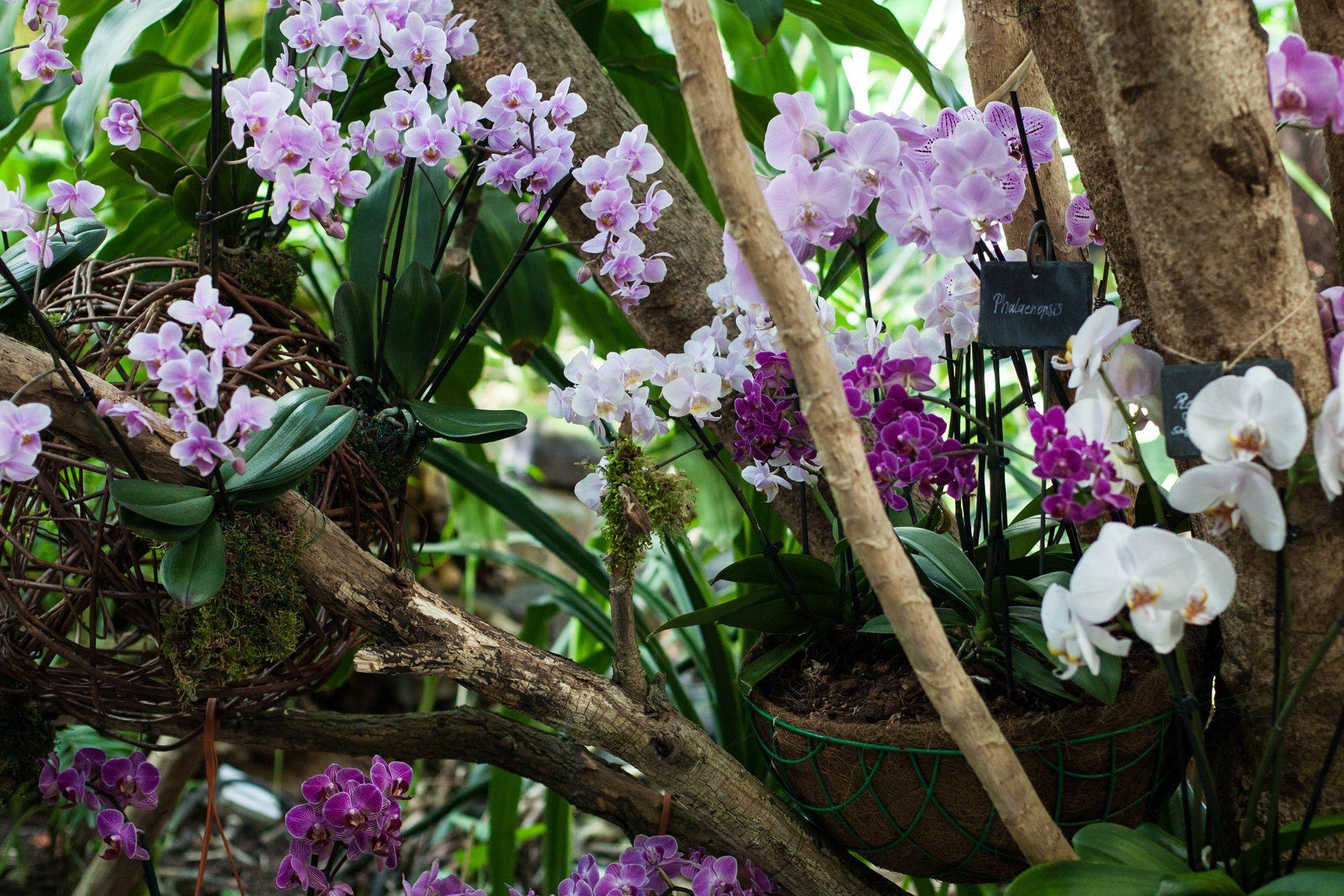 Orchideen in der Biosphäre Potsdam, Foto: Sabrina von der Heide