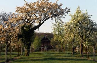 Blühende Obstbäume in der Russischen Kolonie Alexandrowka, Foto: TMB-Fotoarchiv/ Bach